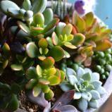 [plants]plants-01.jpg