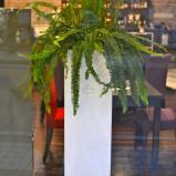 [plants]plants-04.jpg
